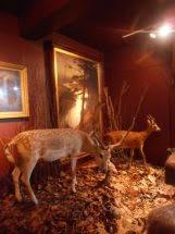 Wild Animal Display